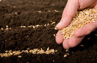 τοπικές ποικιλίες, νομοθεσία, ευρωπαϊκή, σπόροι, μοριακή σήμανση